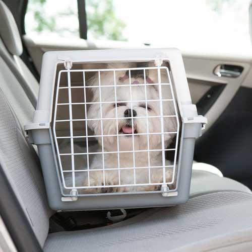 Hundetransport Auto Rücksitz